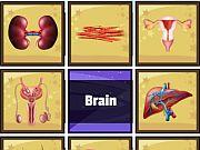 Human Organ Scanner